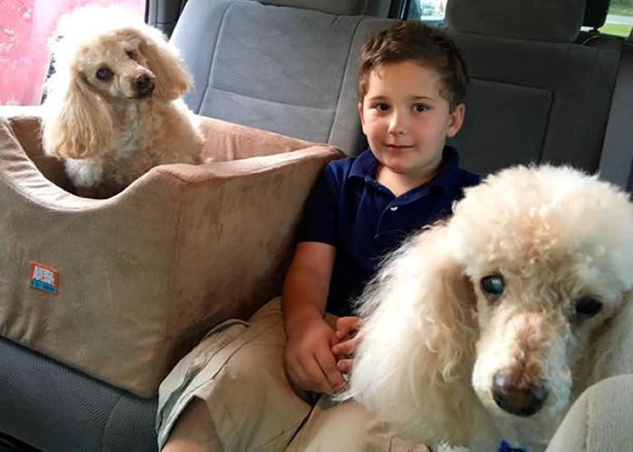 Adopted boy is on a mission to save old dogs who need a home: «I know how it feels not to be loved»